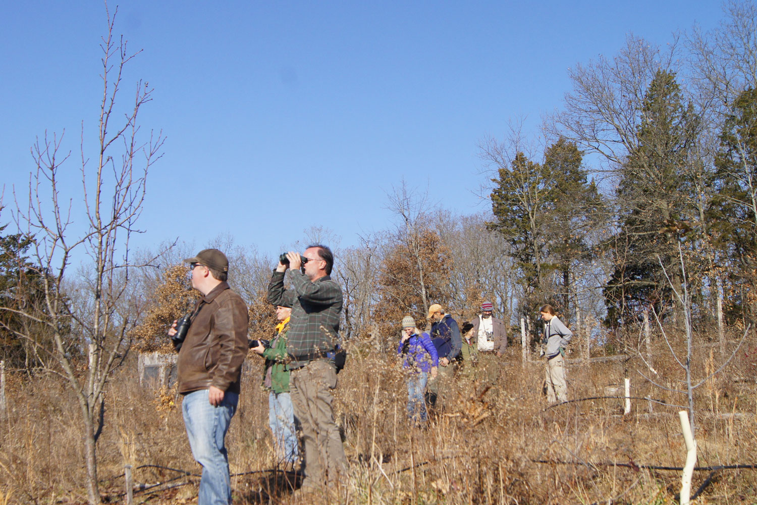 Birding the orchard at Chert Hollow Farm.