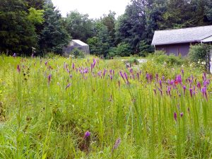 Including Native Plants in Your Yard